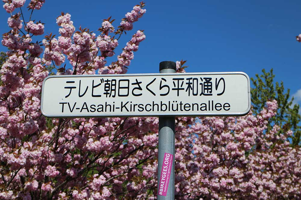 TV Asahi Kirschblütenallee in Teltow