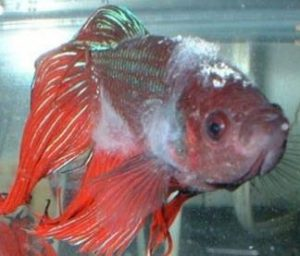 complete guide to betta