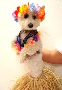 Hawaiian Hula Dancer Dog Costume  Easy To Make: No Sewing ...
