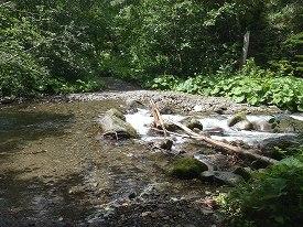 川の向こうに続く林道