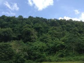 Tutupan hutan lindung mewakili hutan dataran rendah di Pulau Kangean
