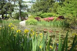 hammond lily pond _049