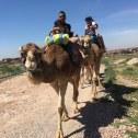 Camel Ride, Ouahat Sidi Brahim