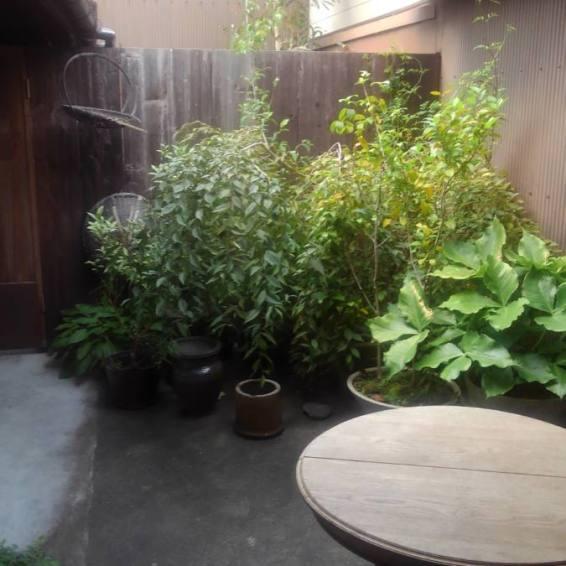 カフェの奥の庭
