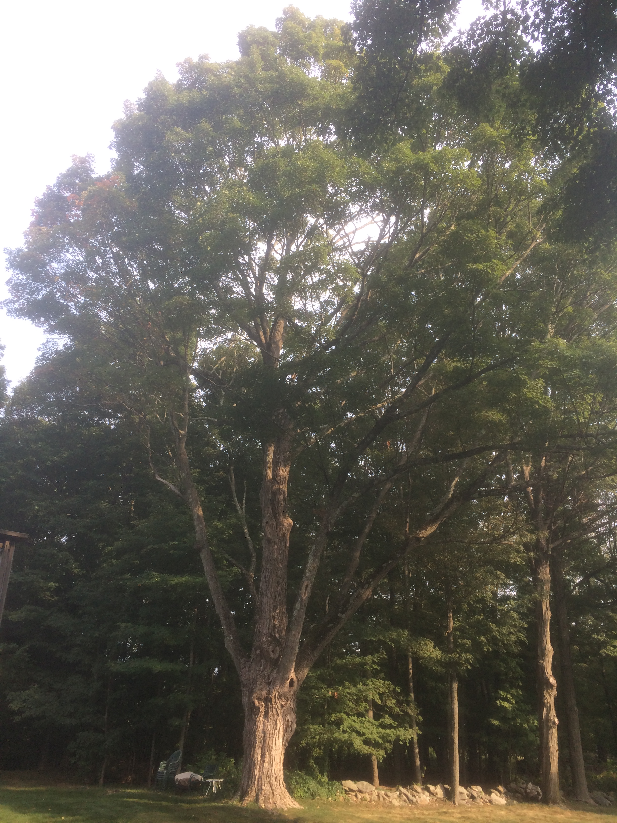 Frequently Asked Questions About Tree Law in Massachusetts ...