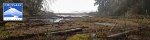 wetland fog