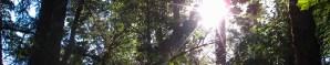 sun_thru_trees