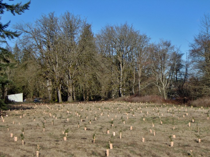 The pasture after the first season of planting, January 2011