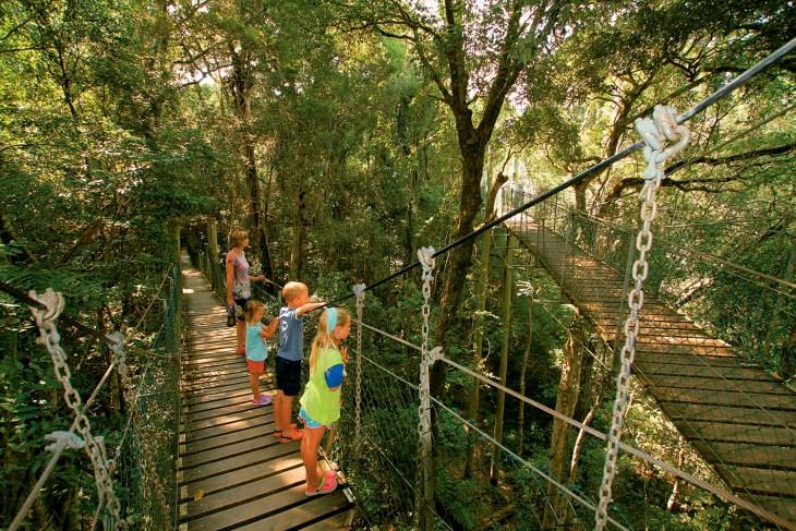 Rainforest walks Lamington Head National Park