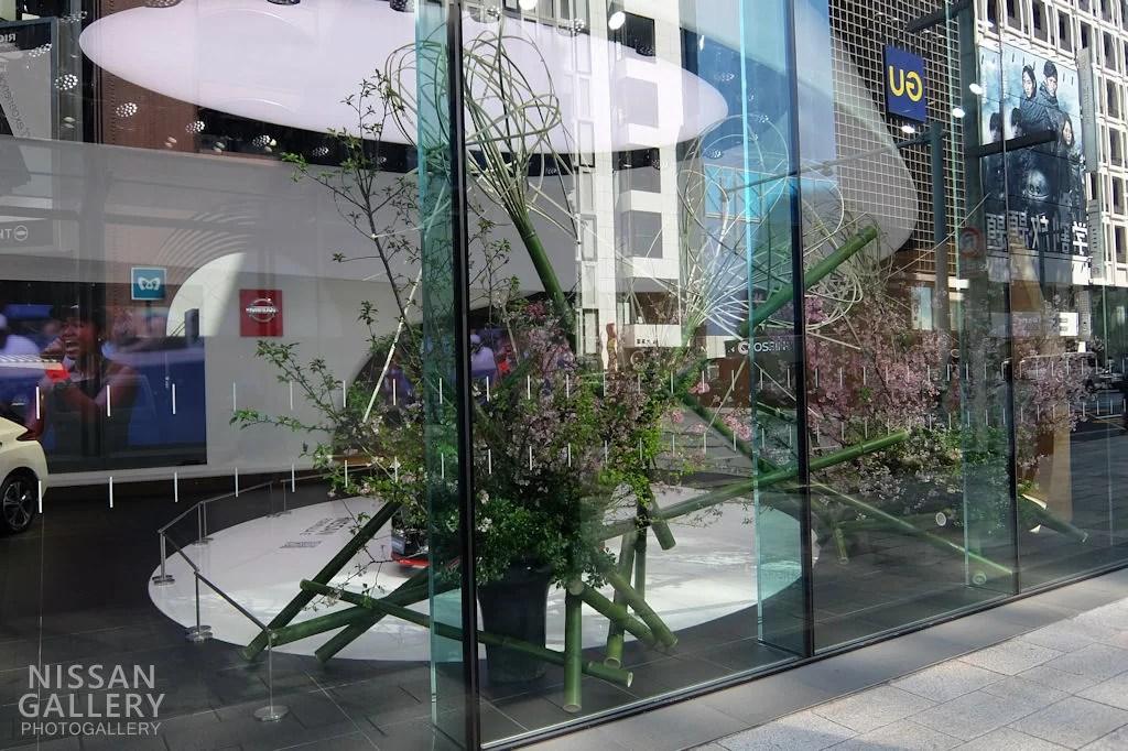 日産クロッシング 桜の生木