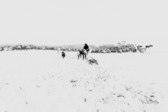 2013-11-21, The reindeer-breeders. The Lake Macka, Nizhnekolymsky District, the Sakha Republic.