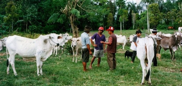 Indonesian livestock and workers (John Young image)