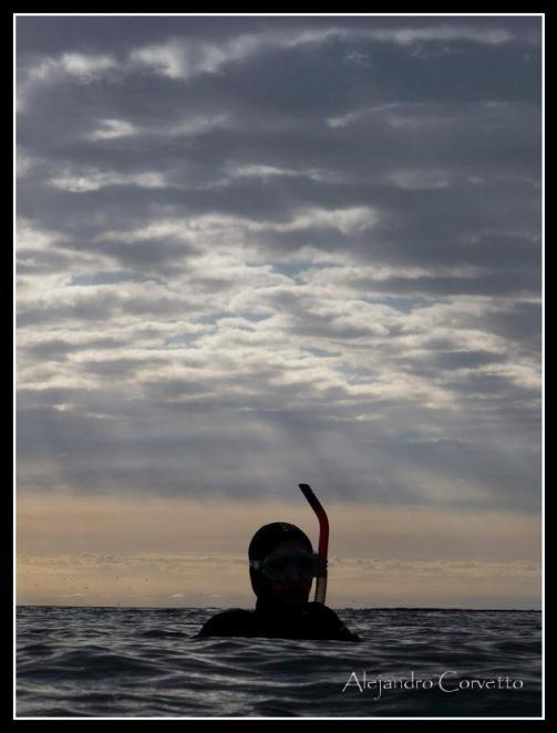 Snorkel con lobos Puerto Madryn