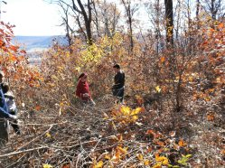 Clearing away the scrub oak that was blocking the view
