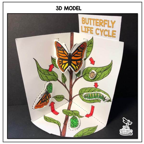 Butterfly Life Cycle Preview 1 - Butterfly Life Cycle Model - 3D Model