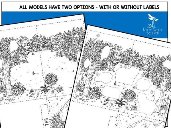 Deciduous Preview 5 - Deciduous Forest Biome Model - 3D Model - Biome Project