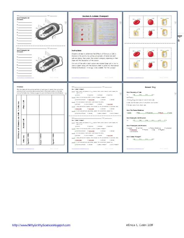 Demo Cell Structure and Function Page 6 - Cell Structure and Function