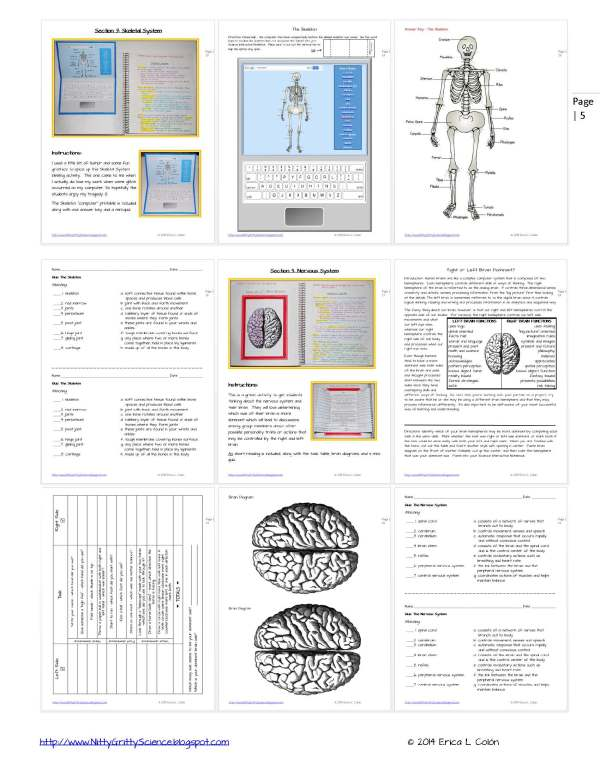 Demo HUMAN BODY Part 1 Page 5 1 - Life Science Interactive Notebook - The Complete Bundle for an Entire Year