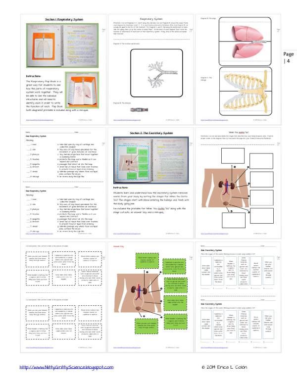 Demo HUMAN BODY Part 2 Page 4 - Human Body – Part 2