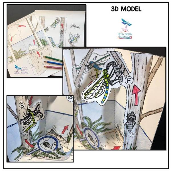 Dragonfly Life Cycle Preview 2 - Dragonfly Life Cycle Model - 3D Model