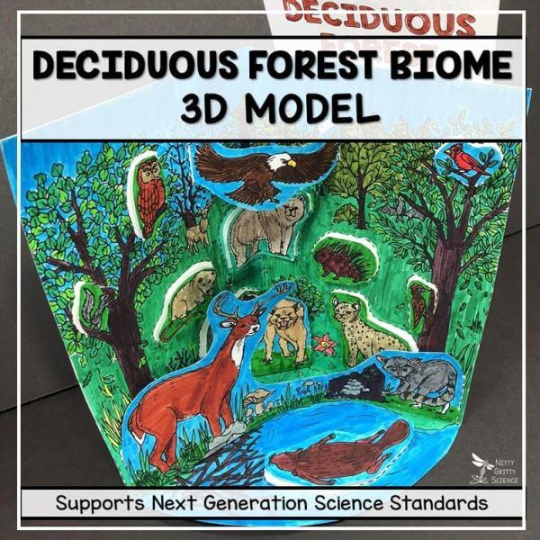 deciduous forest biome model 3d model biome project featured image - Deciduous Forest Biome Model - 3D Model - Biome Project
