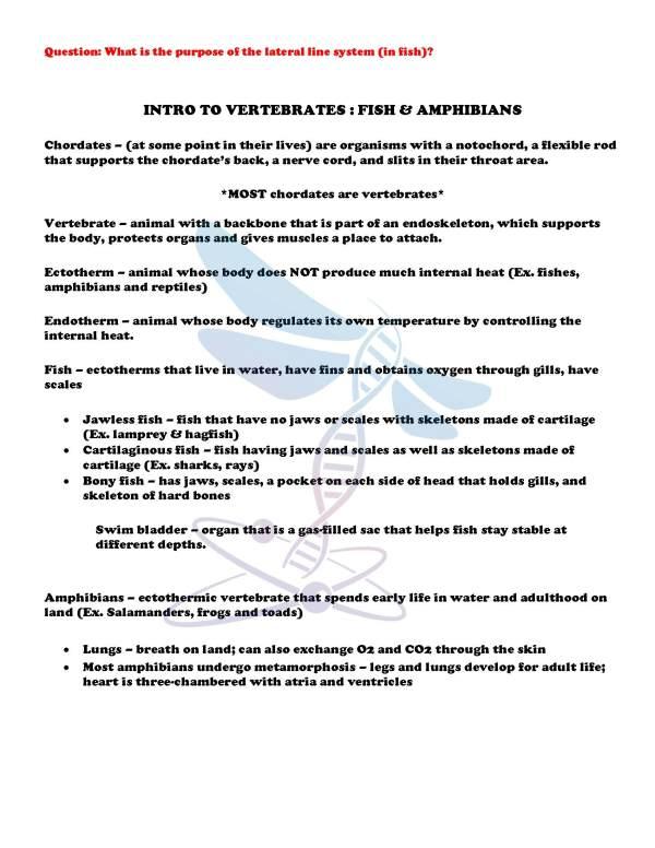 demoLifeScienceNotesPowerPointTestAnimalDiversityVertebratesEDITABLE2398467.pdf Page 4 - Animal Diversity: Vertebrates Life Science Notes, PowerPoint & Test~ EDITABLE