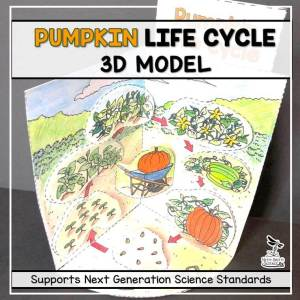 pumpkin life cycle model 3d model october science featured image - Pumpkin Life Cycle Model - 3D Model - October Science