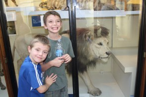 The closest my boys will ever get to a lion - hopefully!