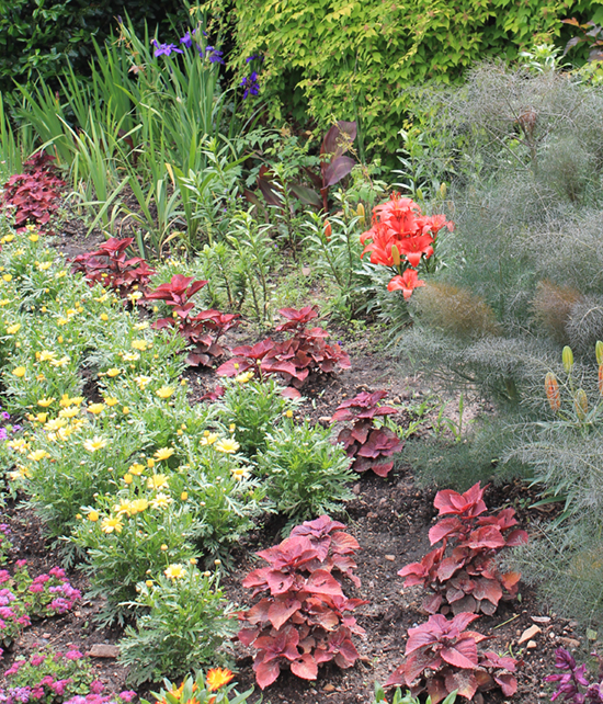 planting annuals small