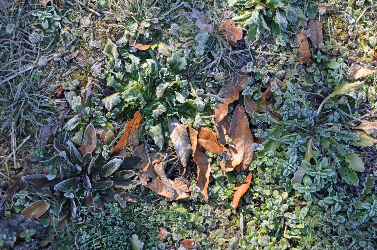 霜に覆われて
