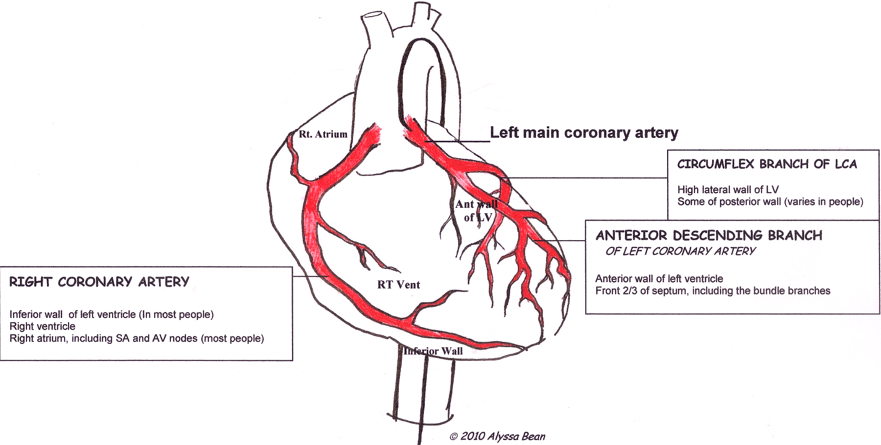 hight resolution of the inferior leads give us information about the electrical activity through the part of the heart to which blood is supplied by the right coronary artery