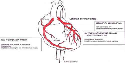 small resolution of the inferior leads give us information about the electrical activity through the part of the heart to which blood is supplied by the right coronary artery