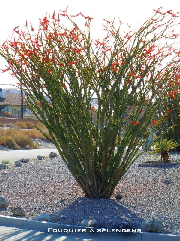 desert plants nixwickedgarden