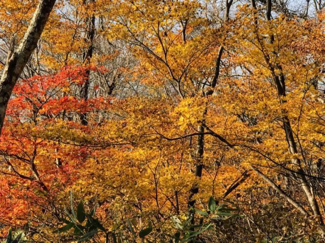下山の紅葉