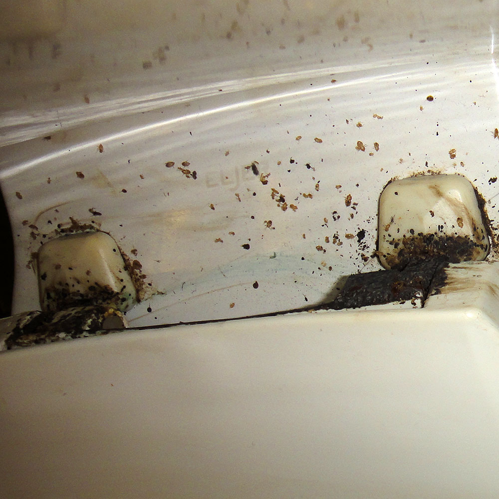 Bed Bug Photos Rutgers Njaes