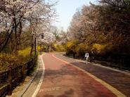namsan trail