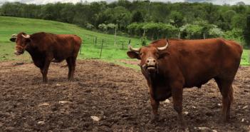 howell living farm
