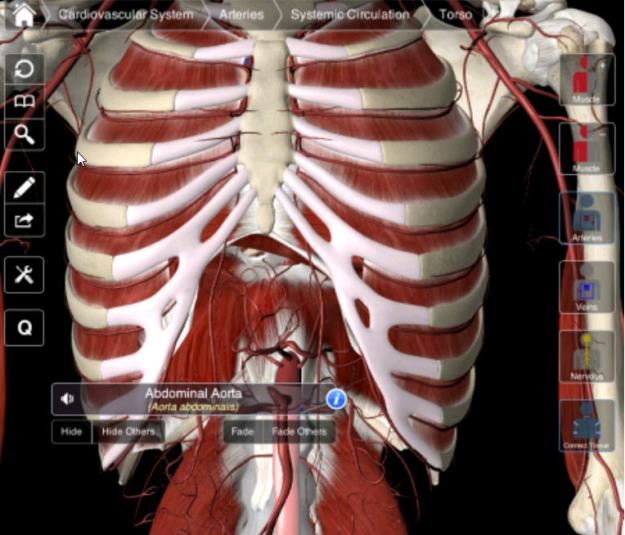 Users can select which systems they want to include from arterial, nervous or venous, to muscle and other connective tissue.