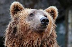 Bear Names - Naming Your Strong Dog   Pet Friendly House