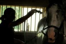Tenaya Marsh of Toms River washes her horse Flip at Rhythm n' Blues Stables, Allentown NJ.