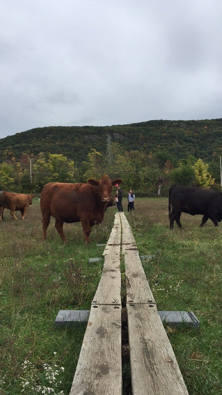 Read more about the article Hiking The Stairway To Heaven Trail in Vernon, New Jersey