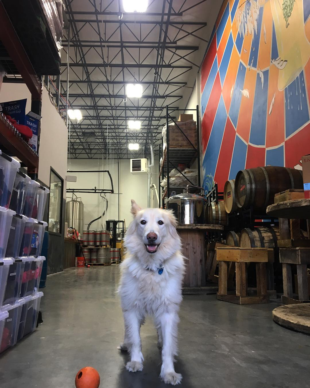 6 Dog-Friendly Awesome Breweries in New Jersey