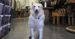 Read more about the article 6 Dog-Friendly Awesome Breweries in New Jersey