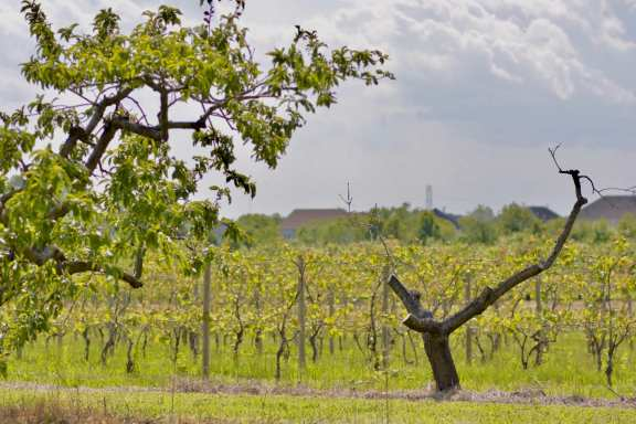Visit wineries in New Jersey