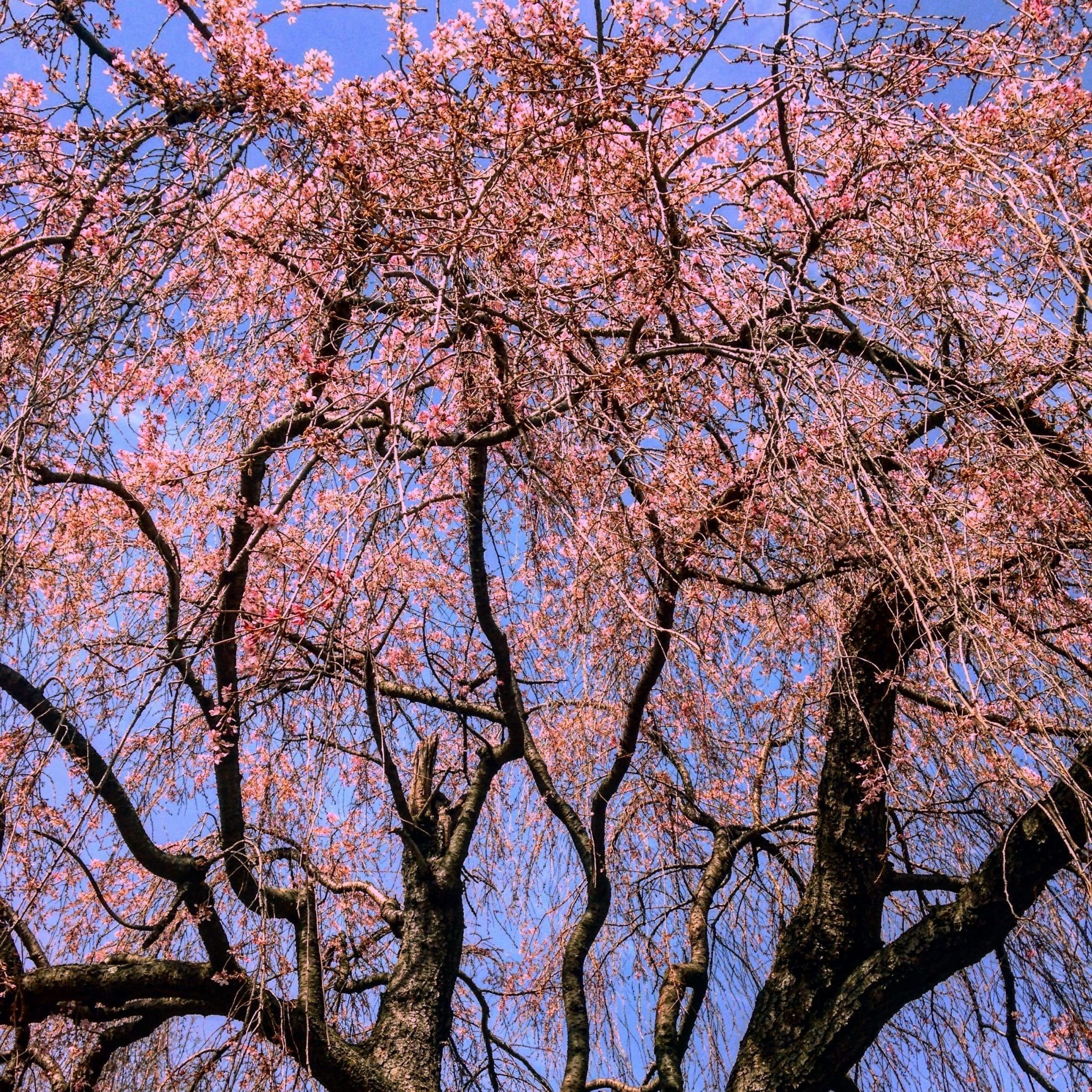 Spring into Action: 6 Tips for Tree Planting in the Garden State