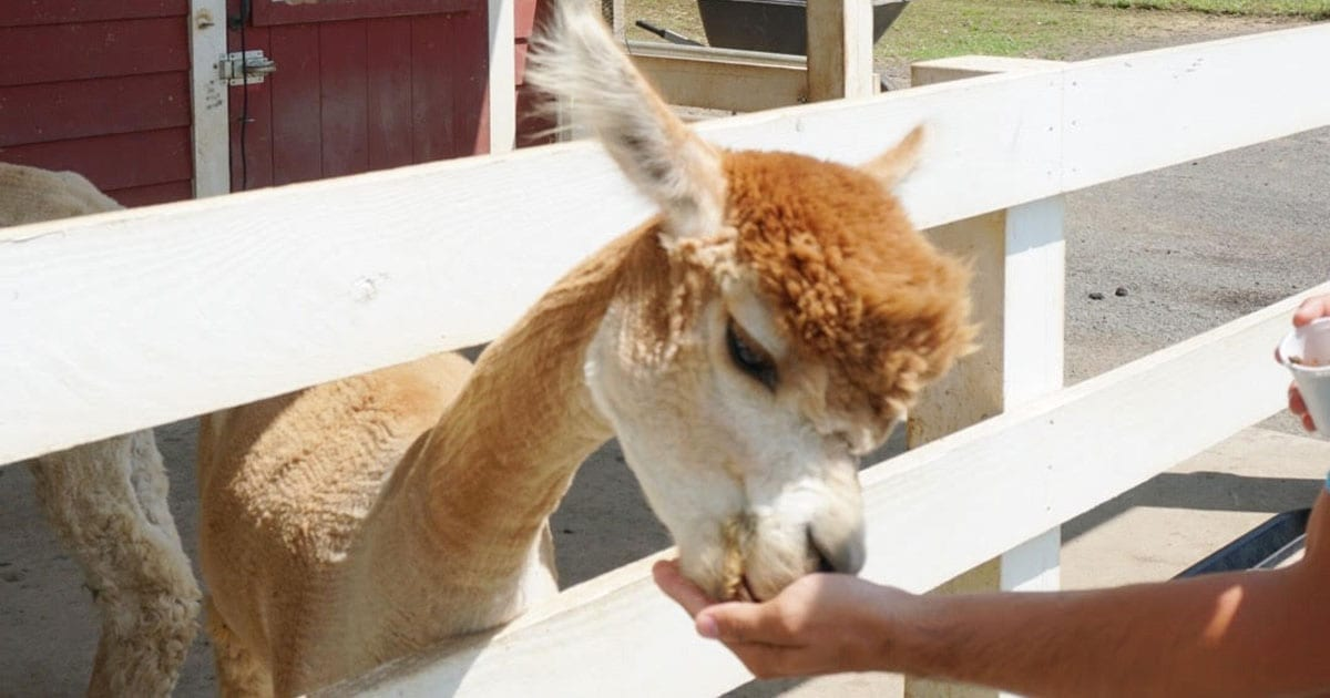 Off the Beaten Path: New Jersey Farms and Animal Sanctuaries