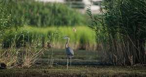 Birdy Jerz: Best New Jersey Birding Spots