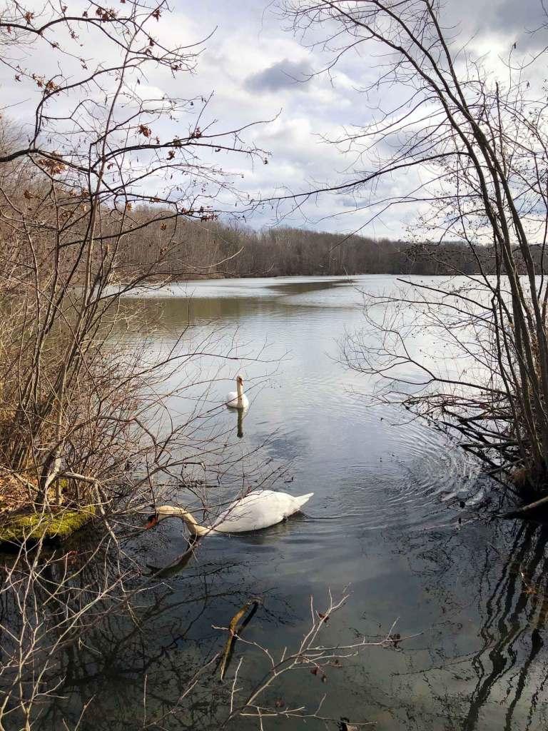 Stroll The Haledon Reservoir Loop In Franklin Lakes, New