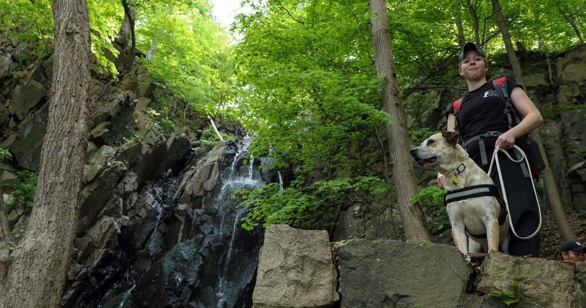 The Best Hikes for You and Your Dog in New Jersey