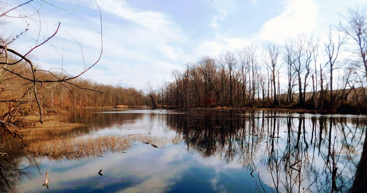 You are currently viewing The Wildlife of Davidson's Mill Pond Park